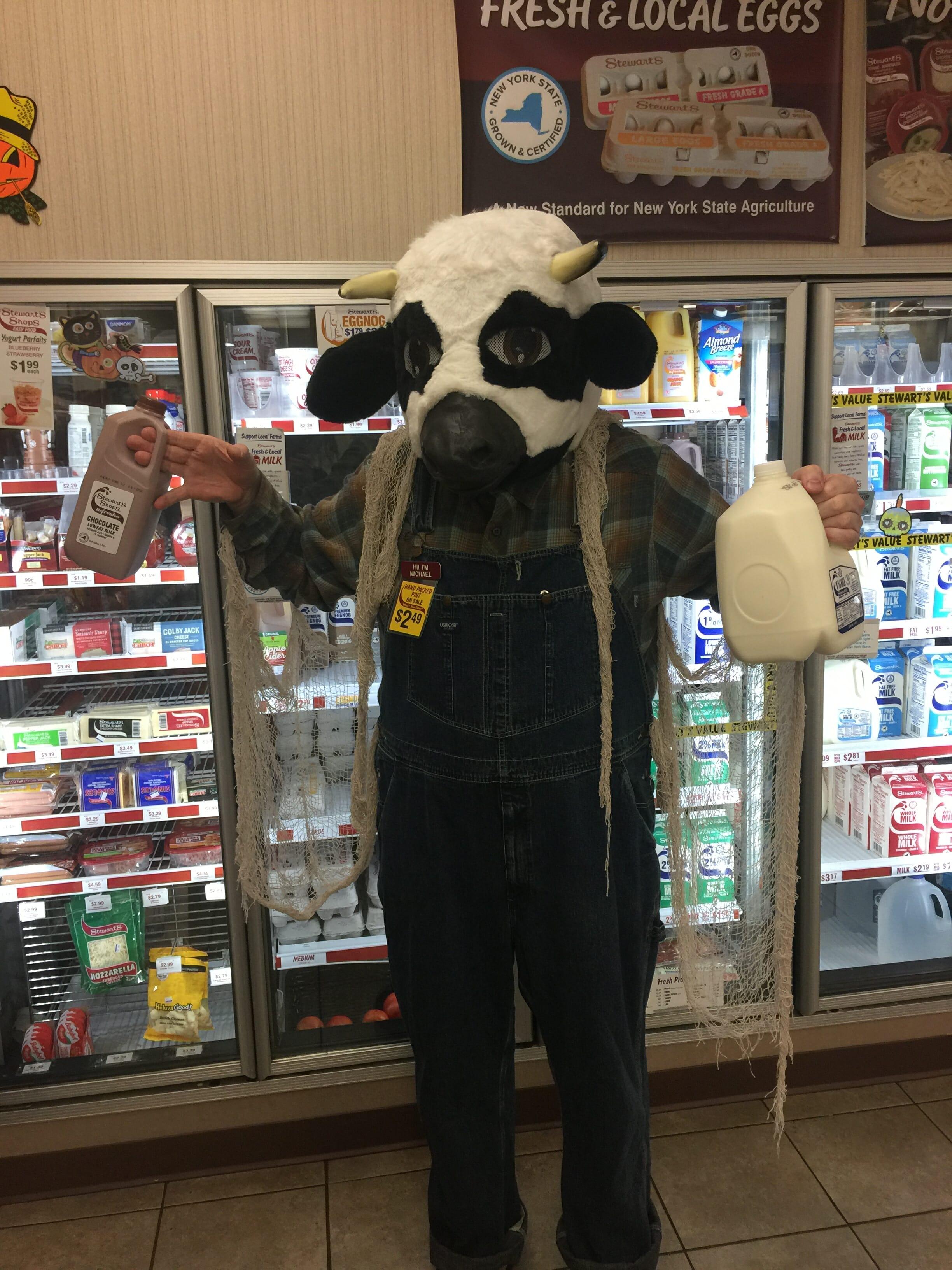 cow getting milk