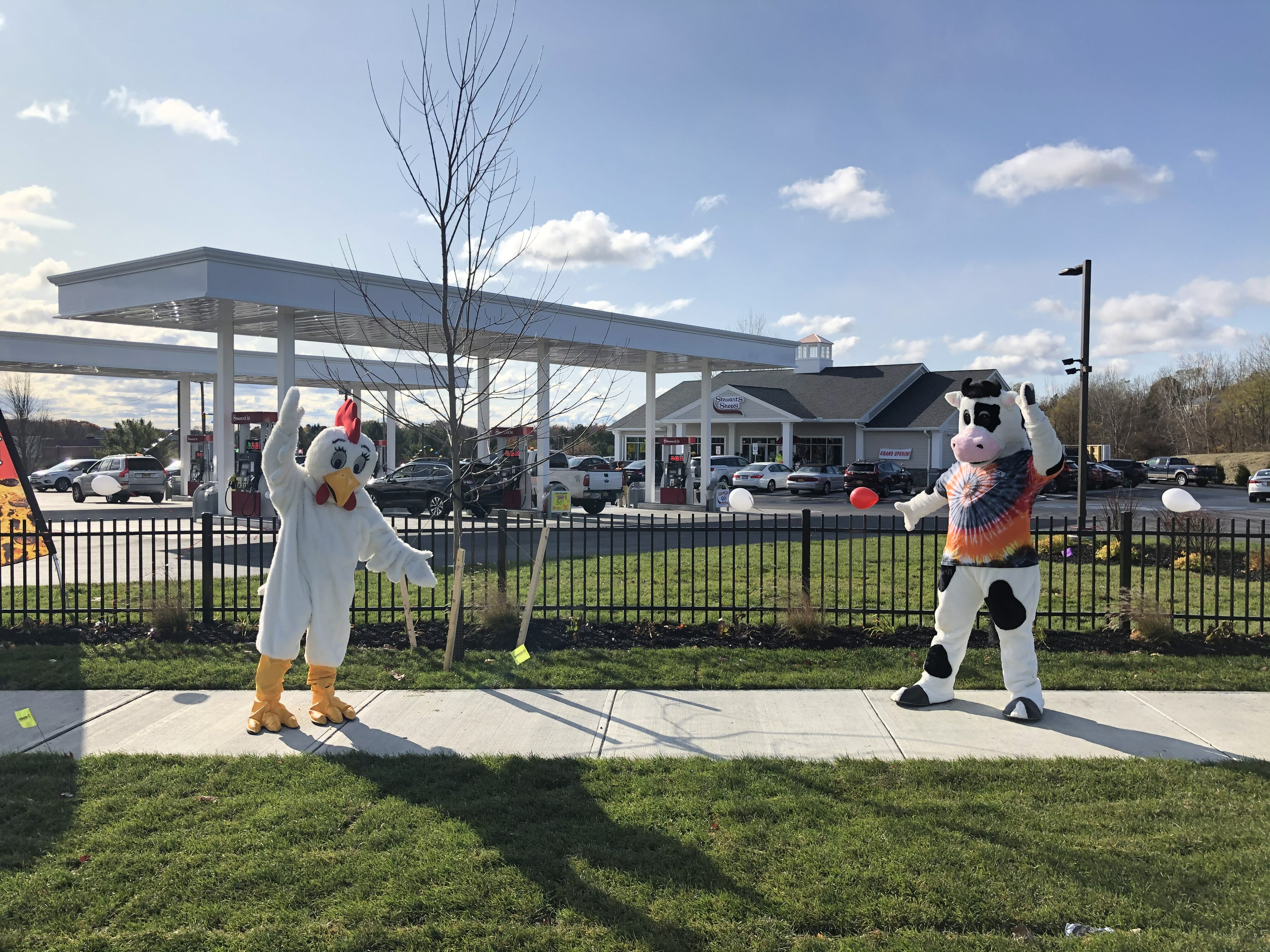 Fresh the chicken and Flavor the Cow in front of the new stewarts shops location