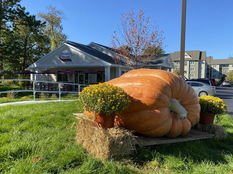 giant pumpkin in front of clifton park shop