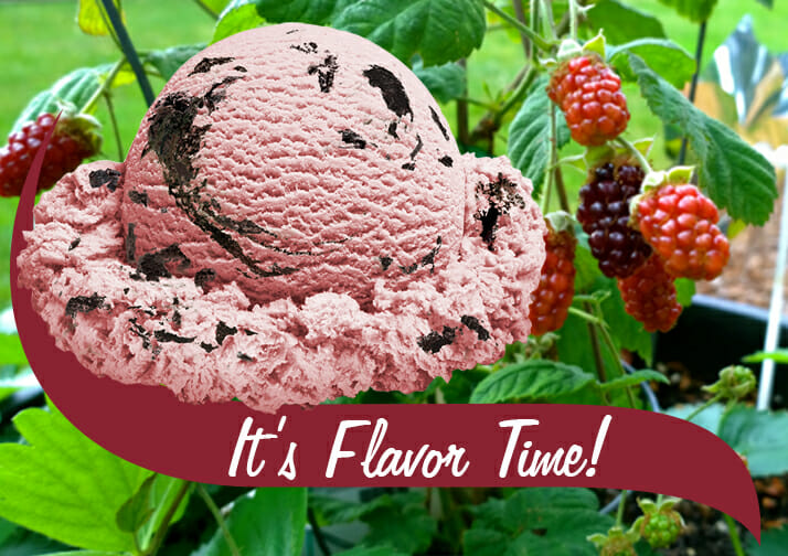 It's Flavor Time Ice cream scoop with berry background
